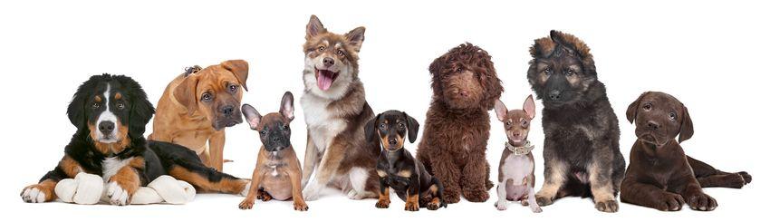 reico hundefutter preisliste